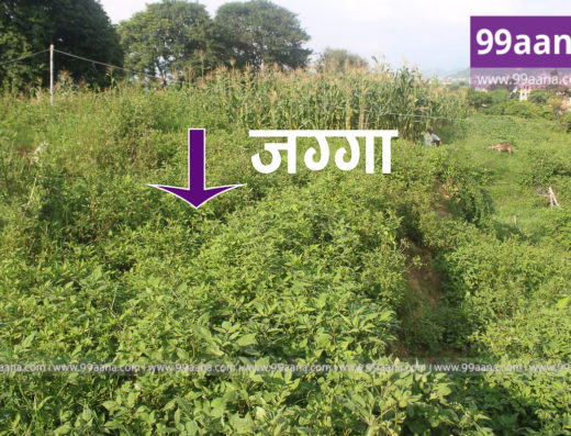 Land for sale at Jharuwarasi, Godawari