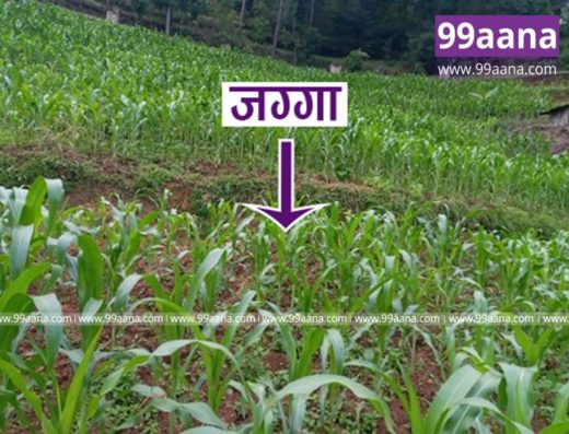 Land for sale at Sipadol, Bhaktapur