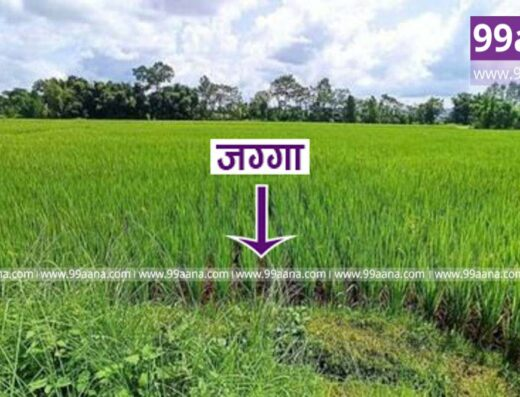 Land for sale at Parsa, Chitwan